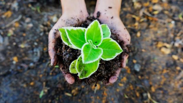 mains_plantes