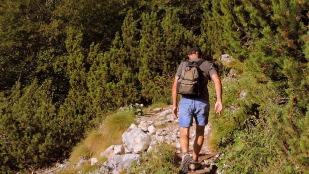 randonneur-foret-montagne